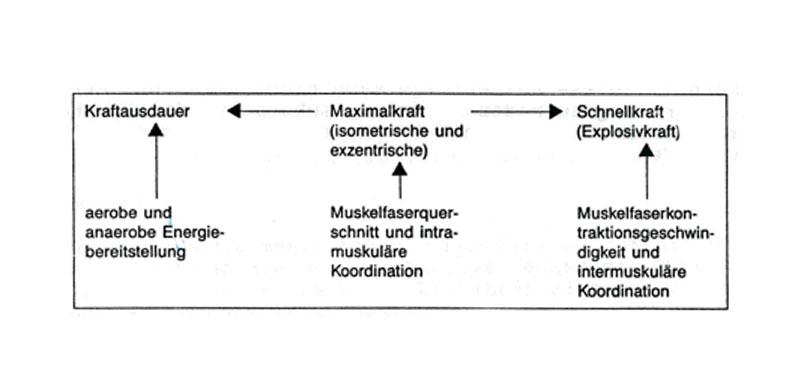 Krafttraining - Kampfkunst Edlitz
